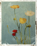 Embellished Poppies I