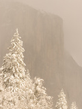 Snow-Covered Trees are Shown with El Capitan in the Background