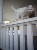 A White Cat on a White Porch Railing