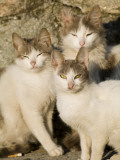 A Group of Three Cats Sit and Squint in the Sun