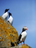 The Shaint Islands are Breeding Grounds for Puffins
