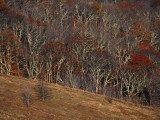 View of Max Patch in Autumn from the Appalachian Trail