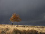 A Lone Tree under a Stormy Sky on the Tavaputs Plateau  Utah