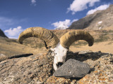 Offerings of a Mani Stone and Sheep Horns and Skull at Mount Kailash