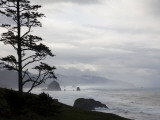 Silhouette of a Tree with the Rocky Oregon Coast in the Background