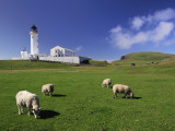 Sheep Graze in a Lush Pasture Near a Lighthouse