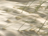 Grasses Bend in the Muddy Waters of the Little Missouri River