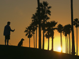 Silhouettes of a Man and His Dog and Palm Trees at Sunset