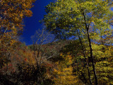 Trees in Autumn Hues on the Mountains Near Whitewater Falls