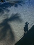 Palm Trees and a Photographer Cast Shadows in the Ocean's Surface