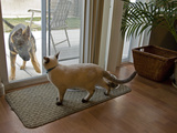 A Dog and a Cat View One Another Through a Sliding Glass Door