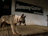 A Dog on the Porch of a Building with a Jimmy Carter Campaign Sign