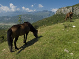 A Horse Grazes on a Hillside in Thessaly