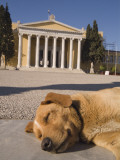 A Sleeping Dog in Front of the Zappeion