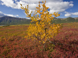 Autumn-Hued Tundra of Kronotsky Nature Reserve