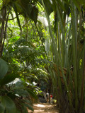 Tourists in a Palm Tree Forest at the Vallee De Mai Nature Reserve