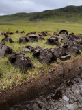Peat Cutting on the Isle of Lewis