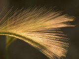 Close Up of Prairie Grasses Shot in Late Afternoon in the Grasslands