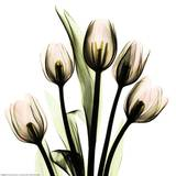 Crystal Flowers X-ray  Tulip Bouquet