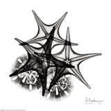 X-ray Starfish and Sanddollar Reproduction d'art par Albert Koetsier