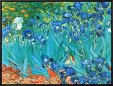 Irises  c1889