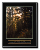 Attitude: Forest Light