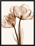 Parrot Tulips II