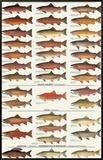 Trout  Salmon & Char of North America I