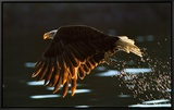 Leaders: Bald Eagle