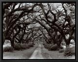 Path in the Oaks II  Louisiana