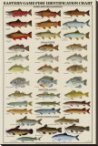 Eastern Gamefish Identification Chart