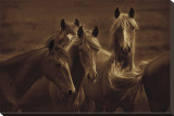 Bad Girls horses animals photo by Tony Stromberg