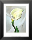 Calla Lily Turned Away  1923
