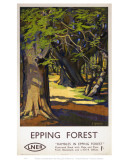 Rambles in Epping Forest