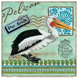 Shorebirds  Pelican