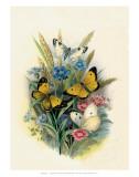 Butterflies and Moths  no 3