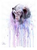 Monkey 7