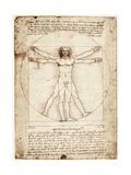 L'Homme de Vitruve Reproduction d'art par Leonardo Da Vinci