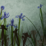 Blue Irises II