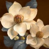 Blooming Magnolias II
