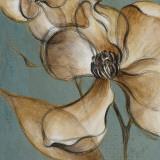 Translucent Magnolias
