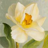 Daffodil Sky I