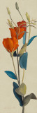 Red Grandiflorum I