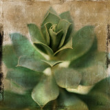 Succulent I
