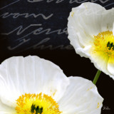 Poppies Over Black I