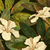 Hibiscus Leaves I