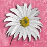 Blooming Daisy III