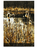 Down in the Reeds by the River