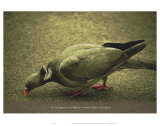 Its Not Against Any Religion to Want to Dipose of the Pigeon