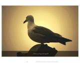 I Dream of Wayward Seagulls